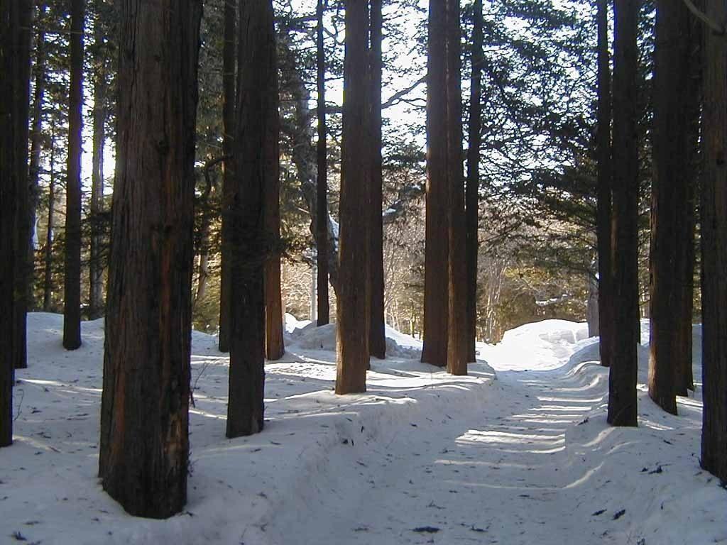 林間トレイル