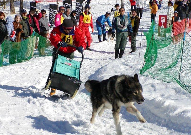 犬ぞりレース