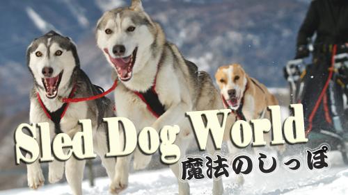 犬ぞりワールド魔法のしっぽ
